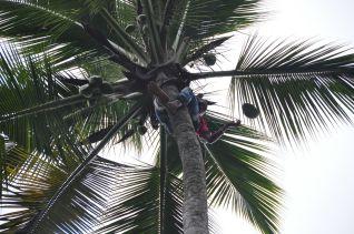Na, wer hat die Kokosnuss geklaut?
