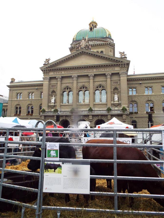 Statt Perlen vor die Säue, Kühe vor dem Parlament