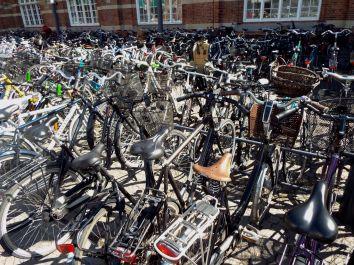 Fahrradmeer