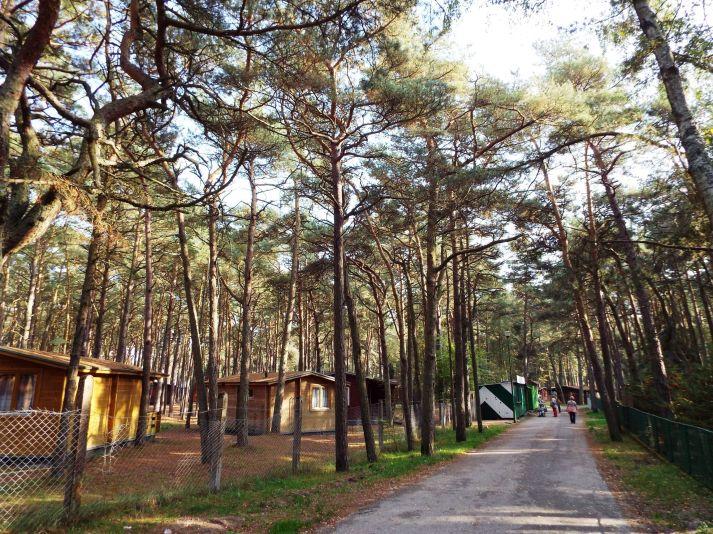 Feriendorf im Wald