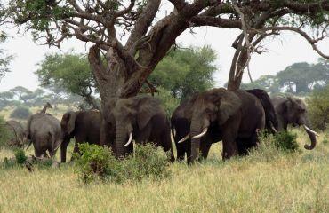 Elefanten en masse