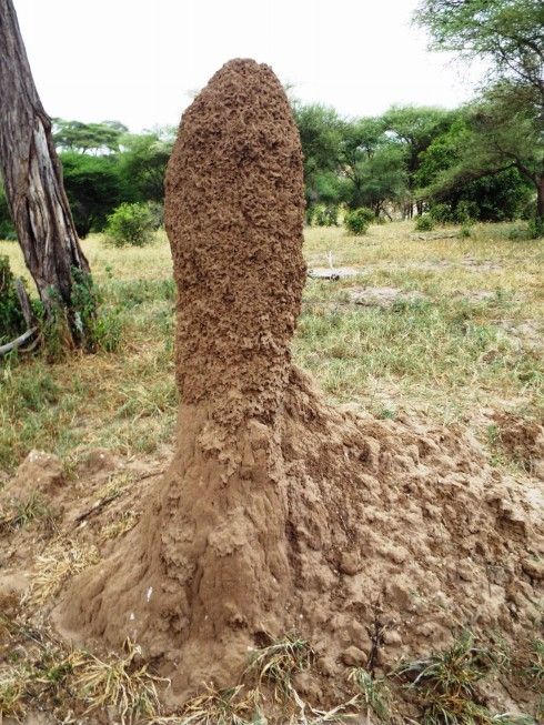 Phallusartiger Termitenhügel