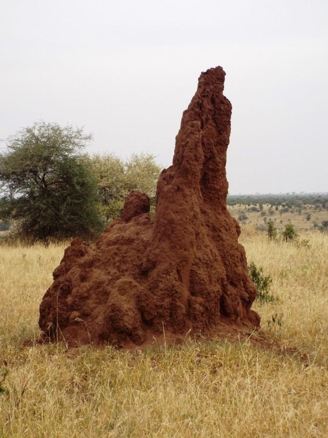 Termitenfestung