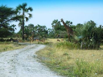 Auf dem Weg zur Safarilodge