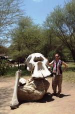 Elefantenschädel & ich (man beachte das Größenverhältnis...)