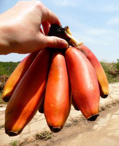Rote Bananen, die Spezialität Mto wa Mbus