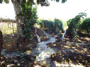 Chayote-Anbau