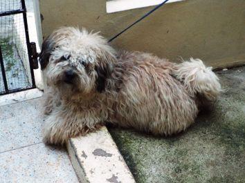 Der Hund von Manuels Gastfamilie - Liebe auf den ersten Blick!