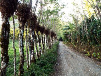 """Weg zur """"Rancho Din Lulú"""""""