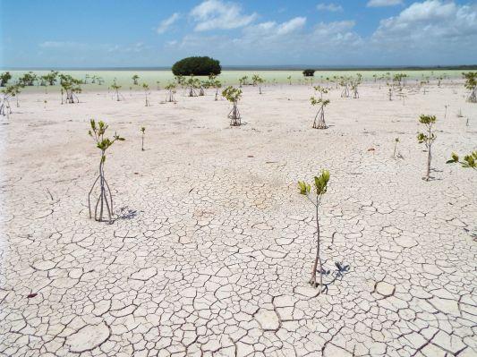 Zwischen Trockenheit und Feuchtigkeit