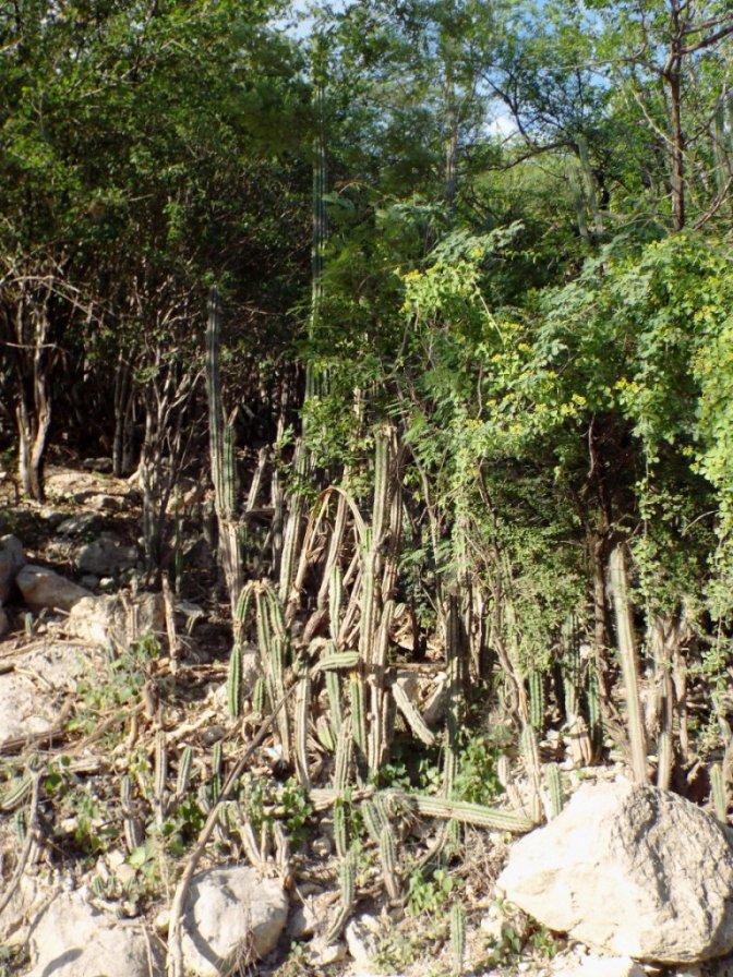 Kaktus(im)Wald
