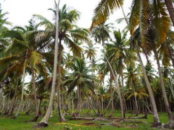 Herrlicher Palmenwald - die Moskitoschwärme sieht man auf dem Bild allerdings nicht...