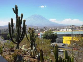 Mein kleiner grüner Kaktus & Vulkan El Misti