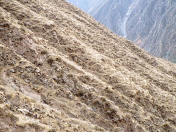 Schlangenmuster auf dem ausgetrockneten Canyon-Hang