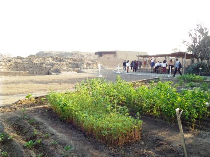 Garten mit Pflanzen, die schon die Inkas anbauten