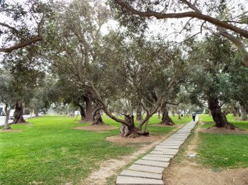 Olivenhain mitten im Bankerviertel