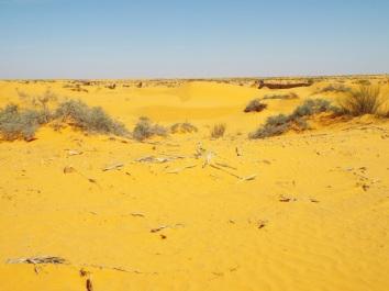 Erste Saharadünen